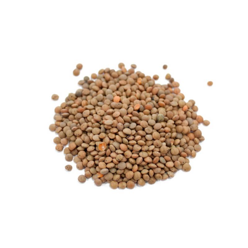 lentilles-brunes